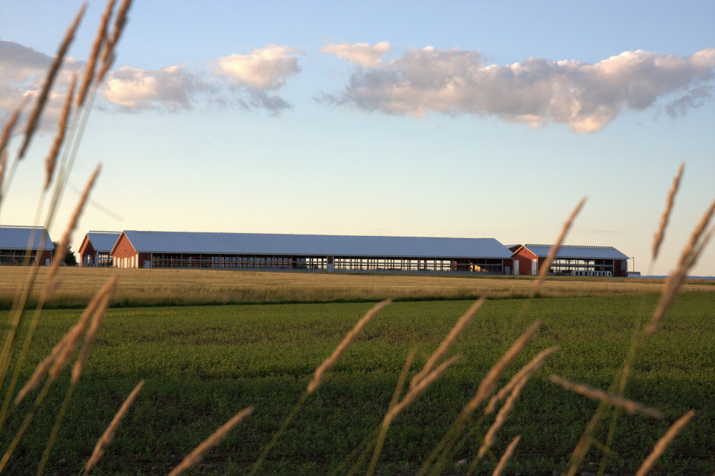 Farm building and field