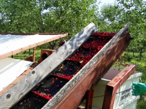Cherry Harvest, Peninsular ARS